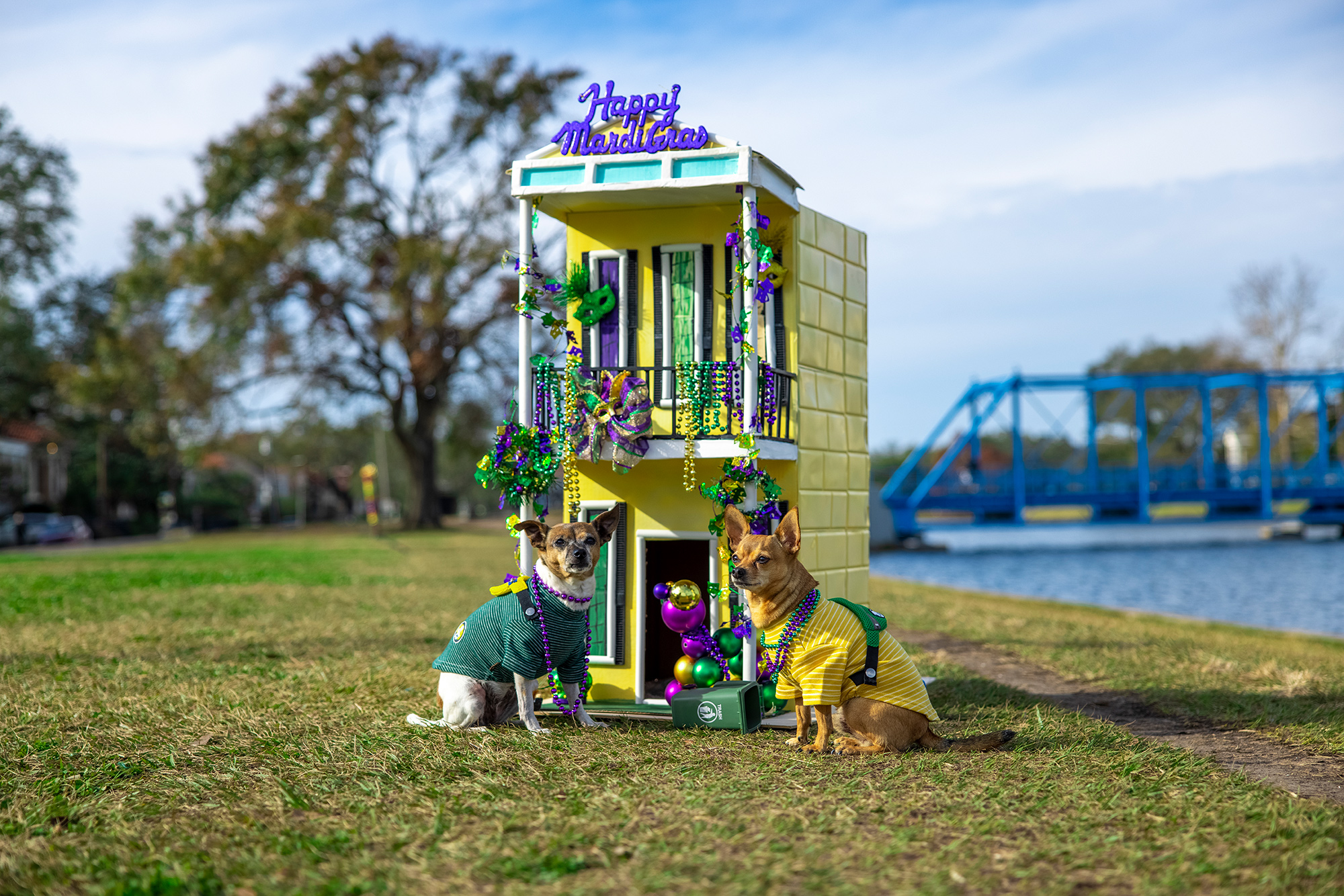 Mardi Gras Dog House