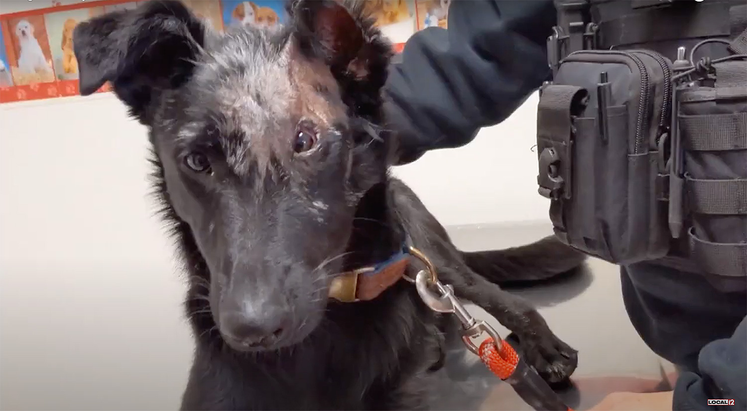 Dog severely burned will now be trained to comfort child burn victims
