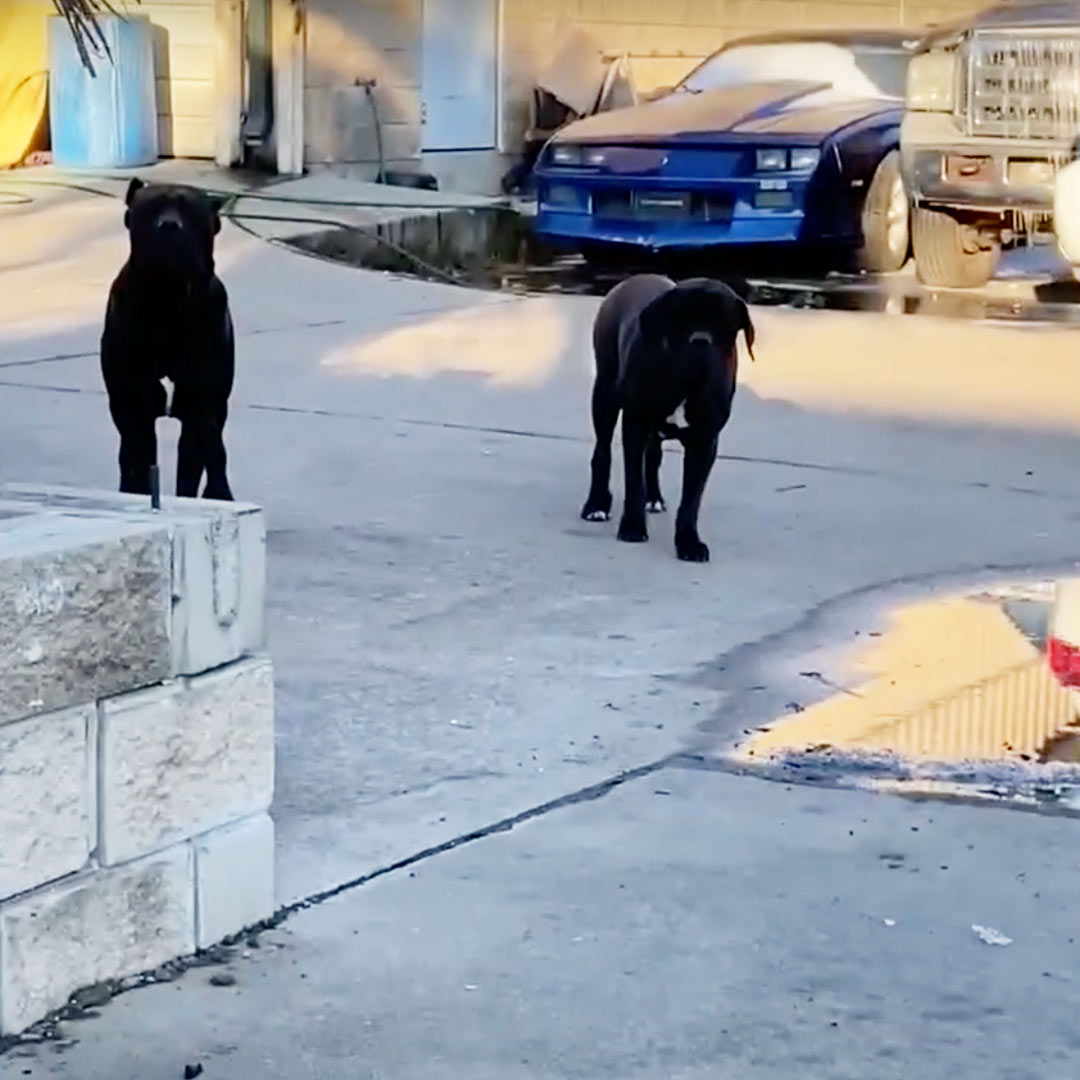 abandoned dogs in Houston
