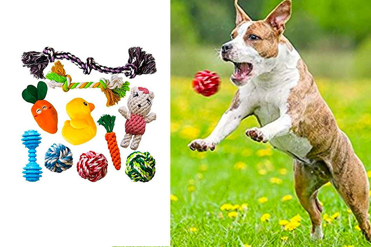 AMZpets 10 Dog Toys for Small Dogs and Puppies