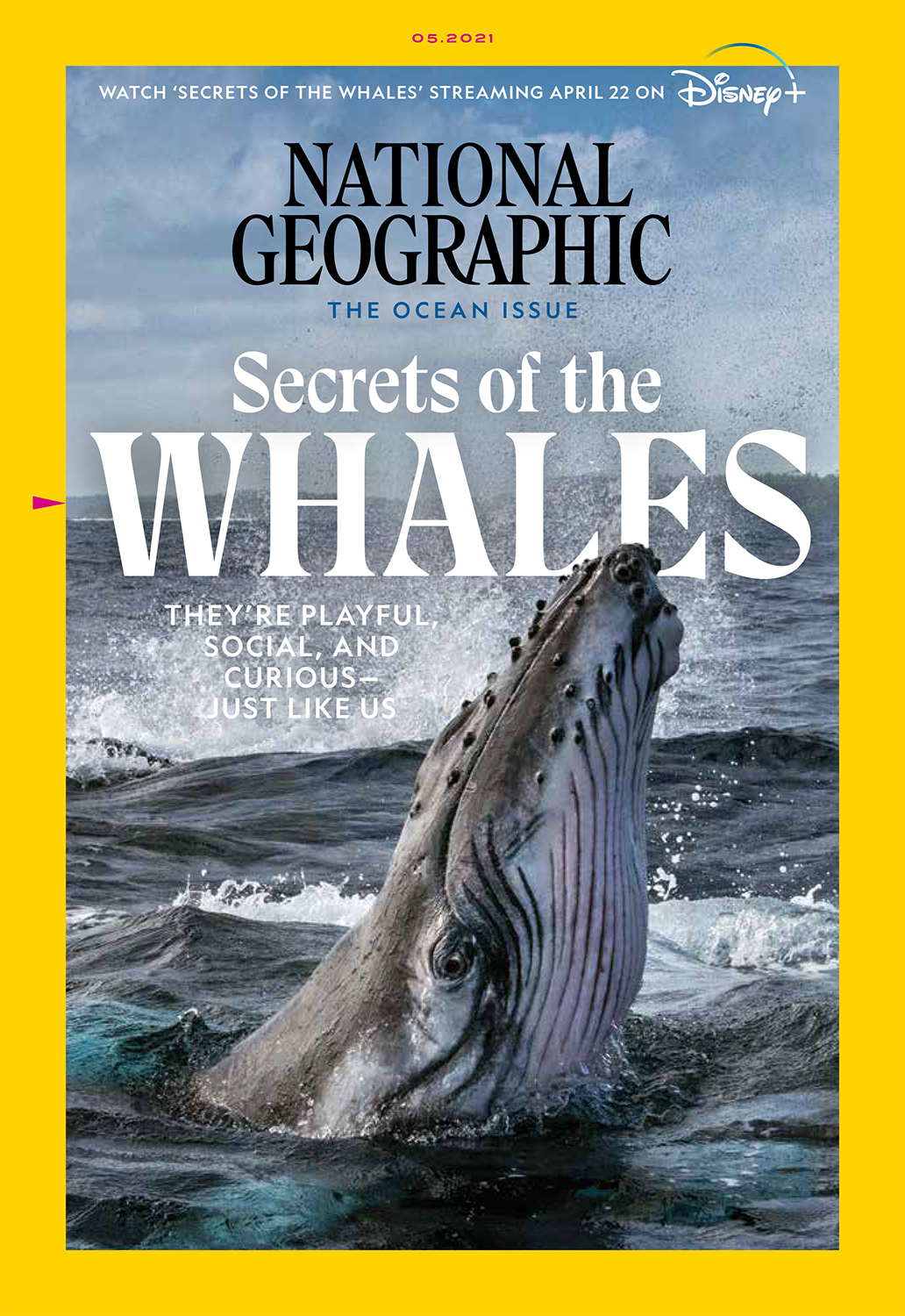 National Geographic Ocean Issue