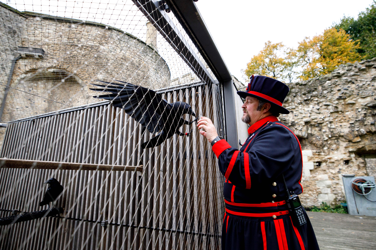 Yeoman Warder Ravenmaster Chris Skaife poses with a raven at the Tower of London