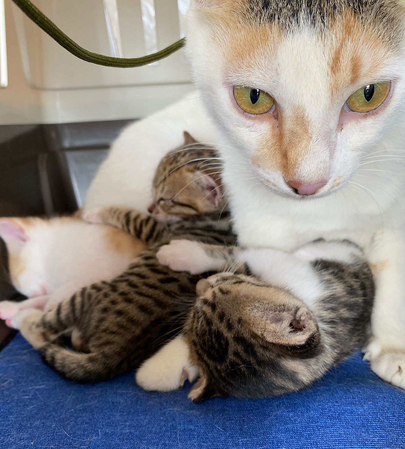 Army Sgt trying to rescue cat and kittens