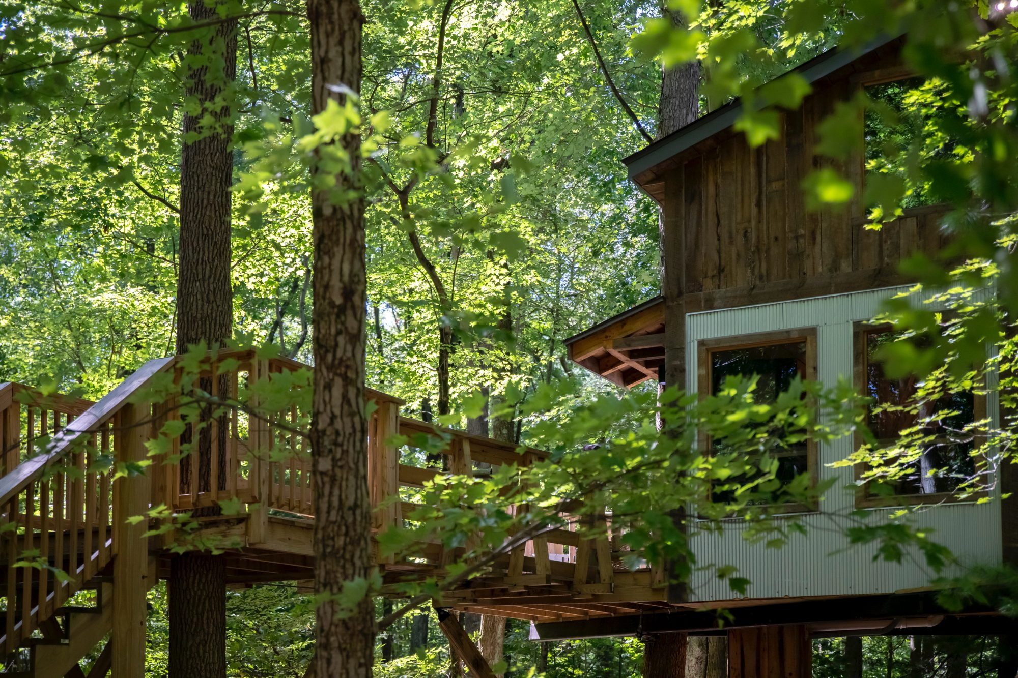 mohicans treehouse