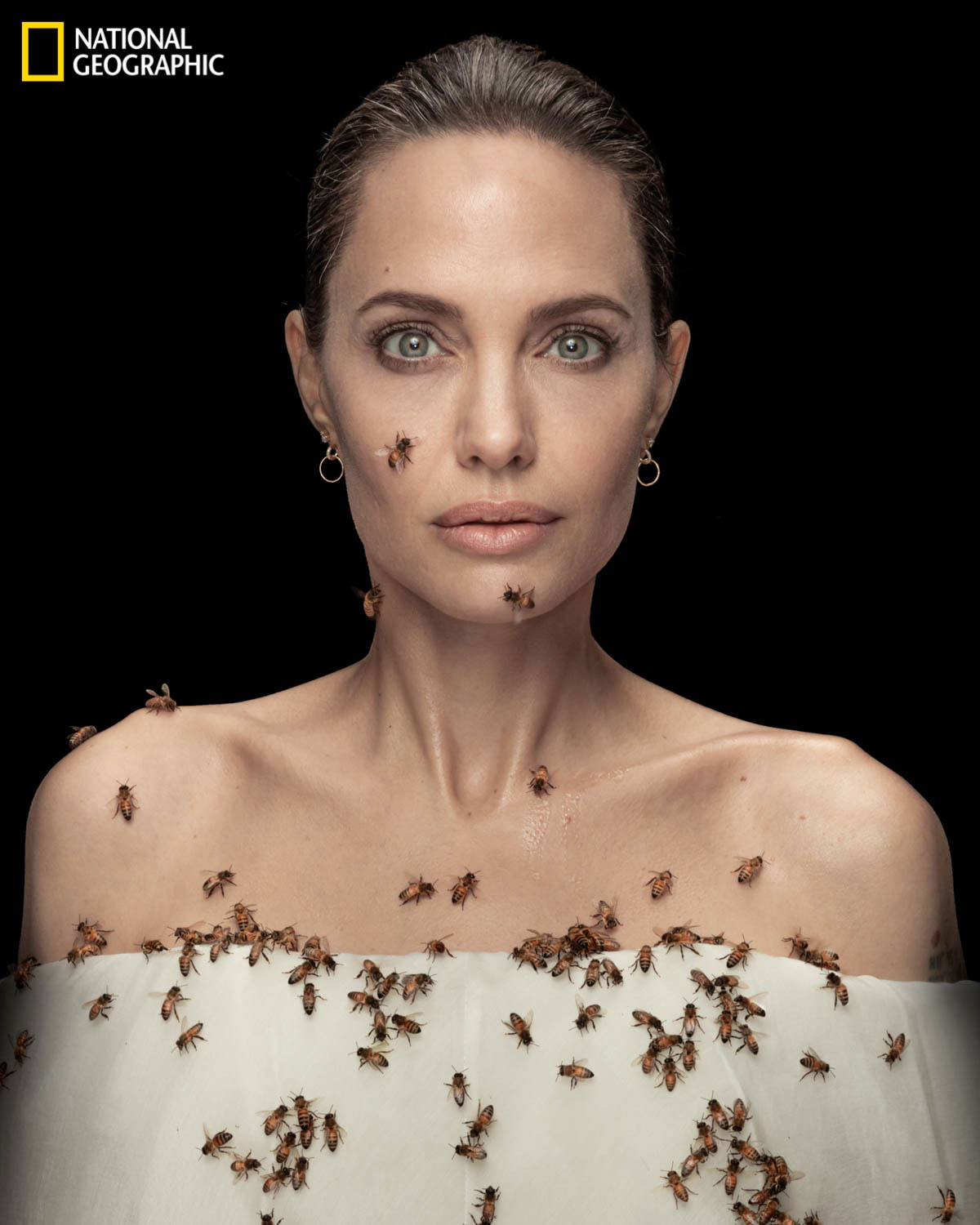 Angelina Jolie Poses With Bees to Raise Awareness