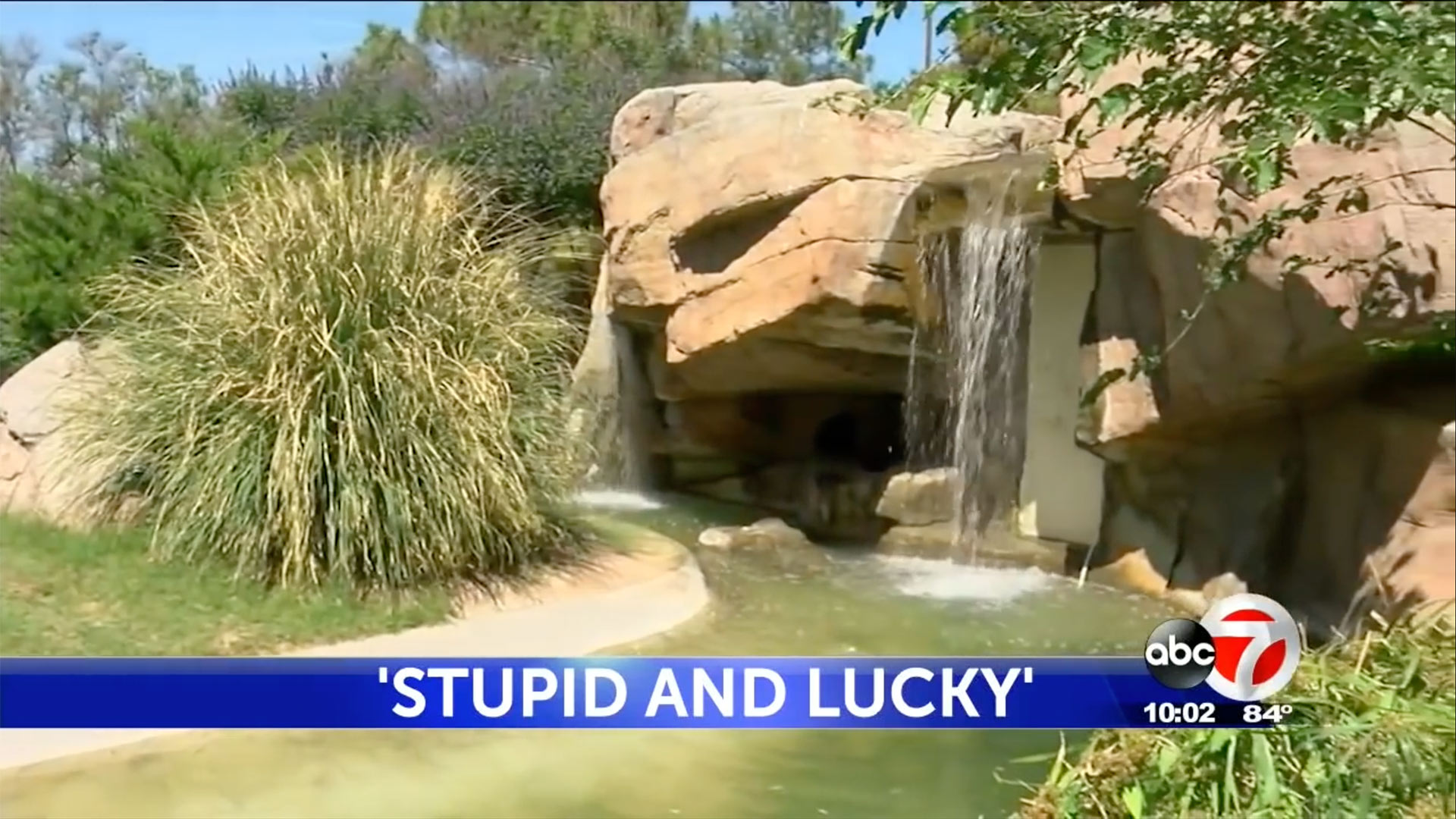 Texas Woman Facing Charges After Jumping Into Monkey Habitat at El Paso Zoo: 'Stupid and Lucky'
