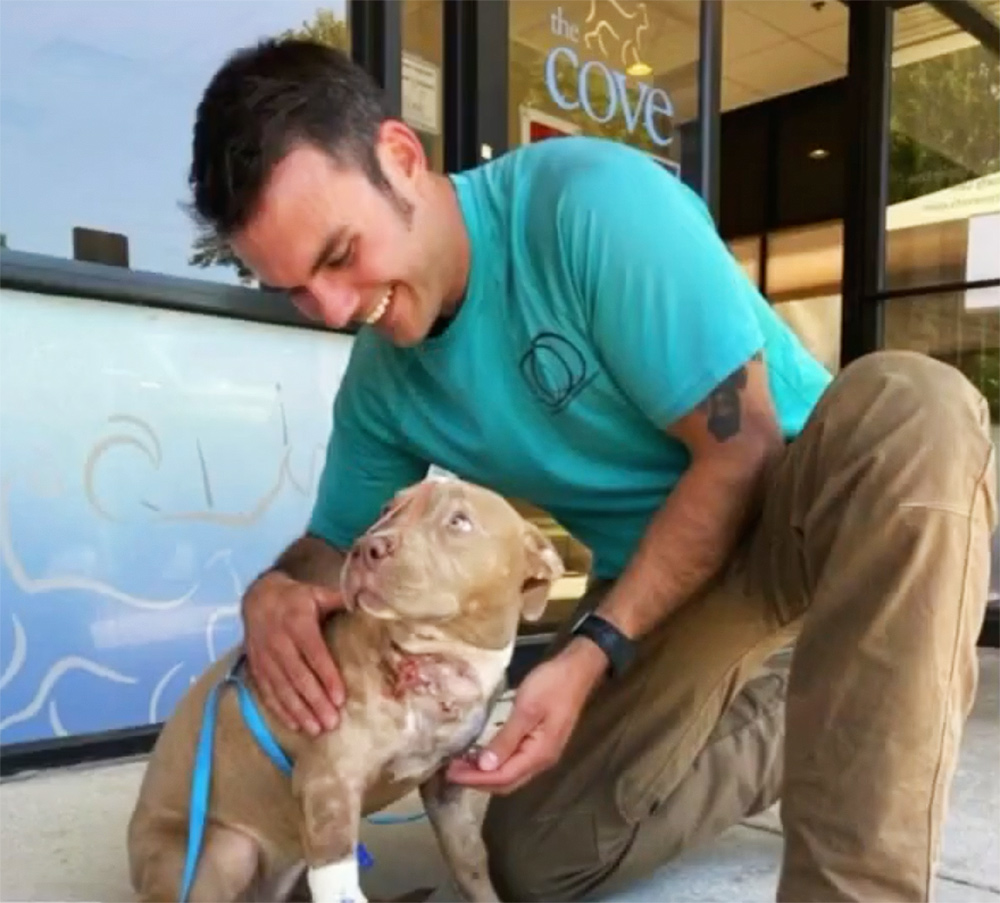 pitbull puppy adopted