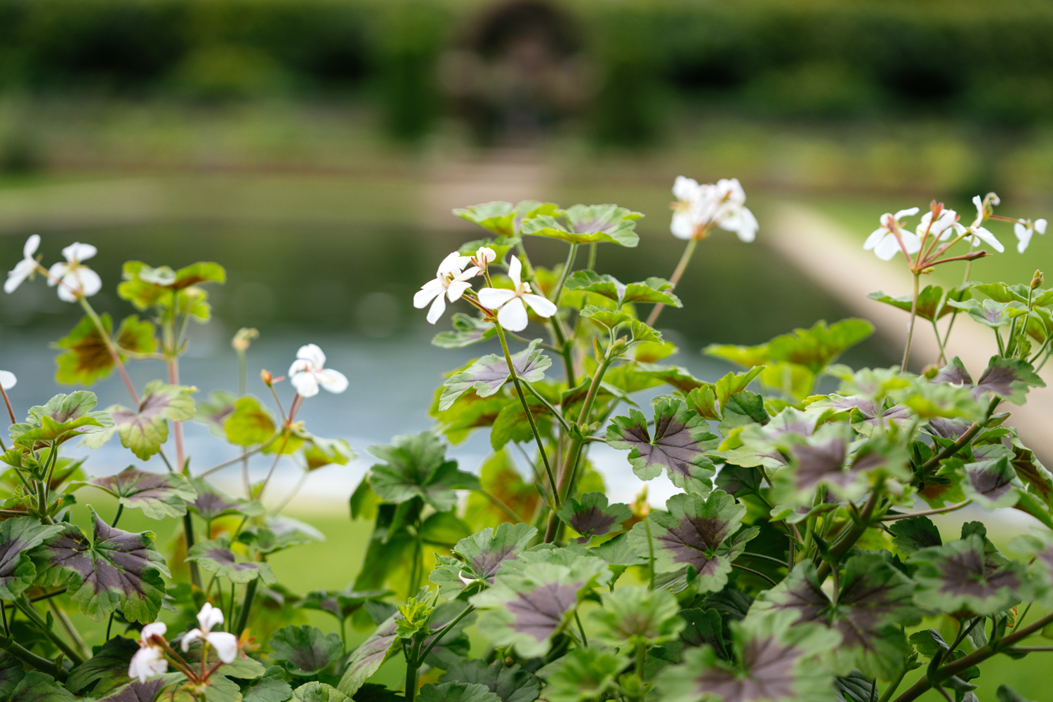 The newly redesigned Sunken Garden at Kensington Palace