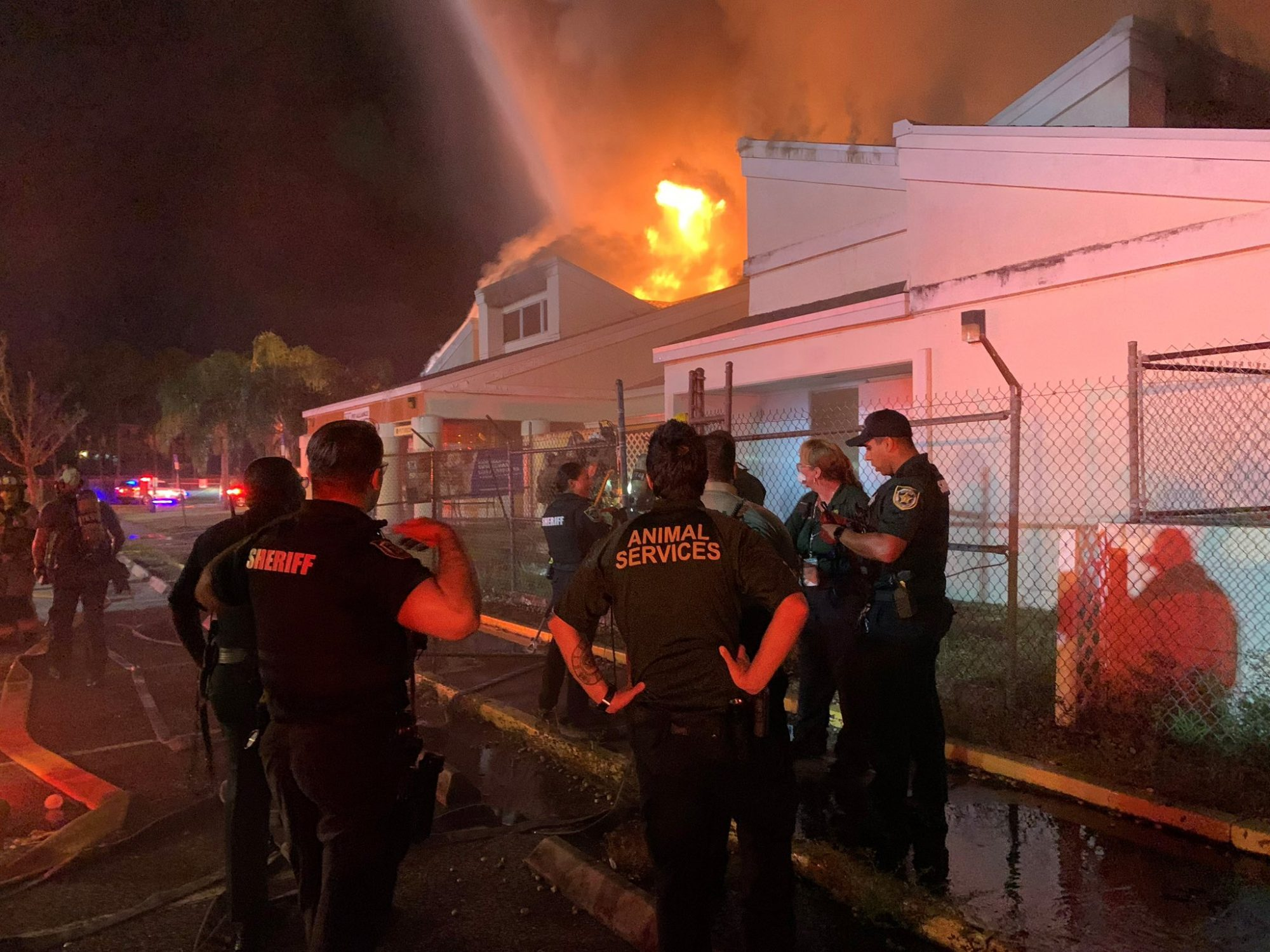 17 Cats Killed, 26 Dogs Saved In Fire At Fla. Animal Rescue