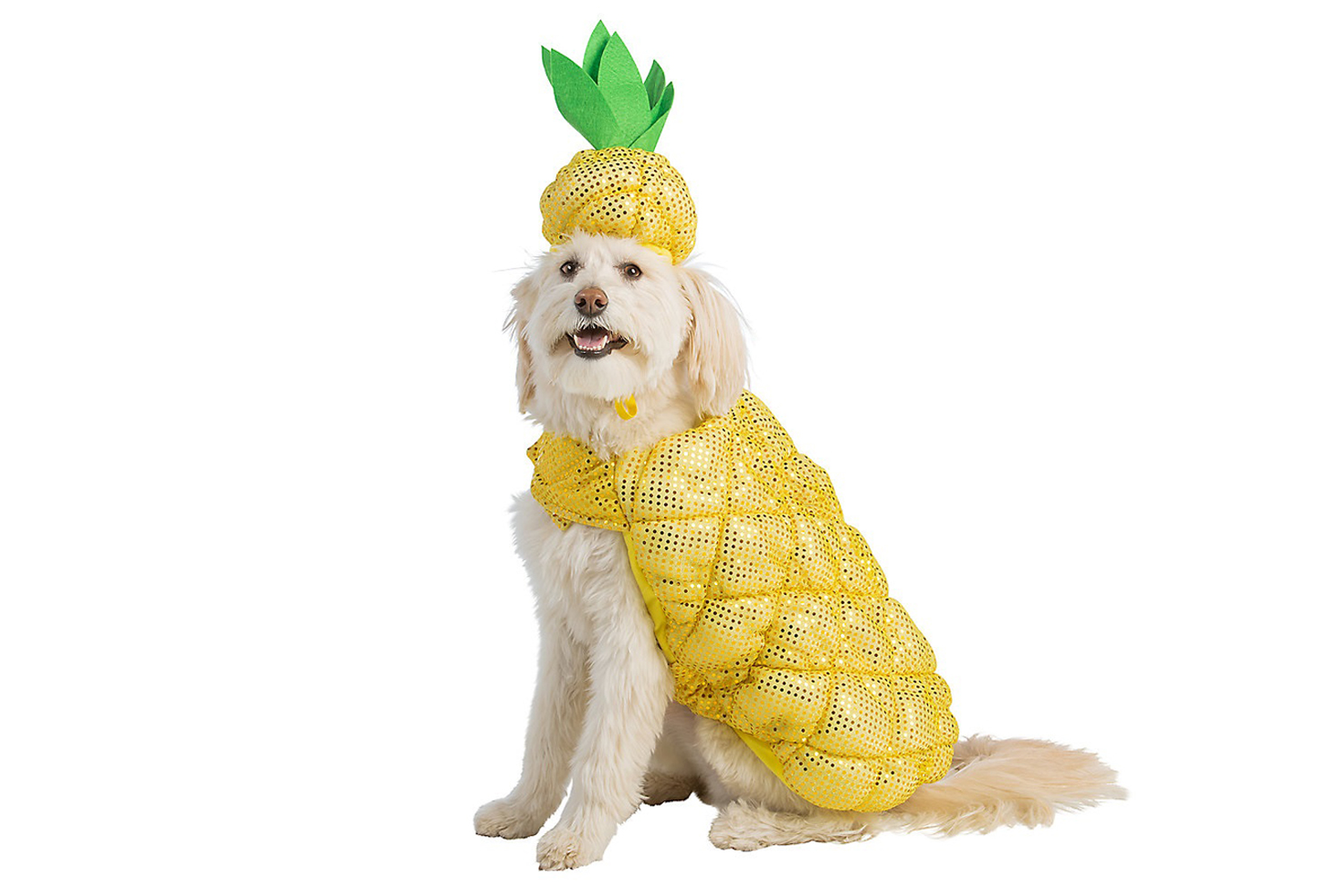21 Adorable Halloween Costumes for Dogs   PEOPLE.com