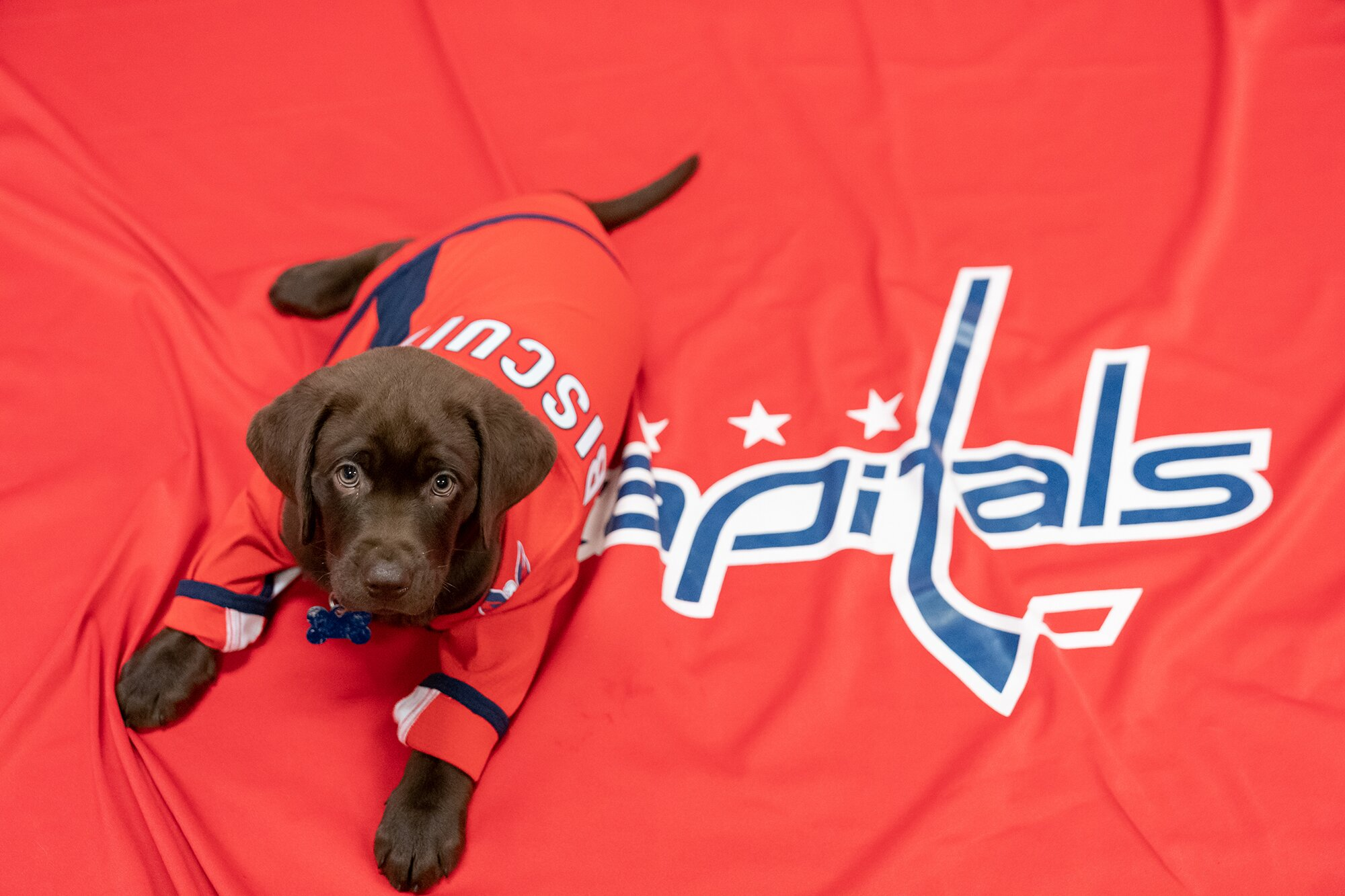 NHL Washington Capitals to Train Future Service Dog 'Biscuit' for Veteran or First Responder