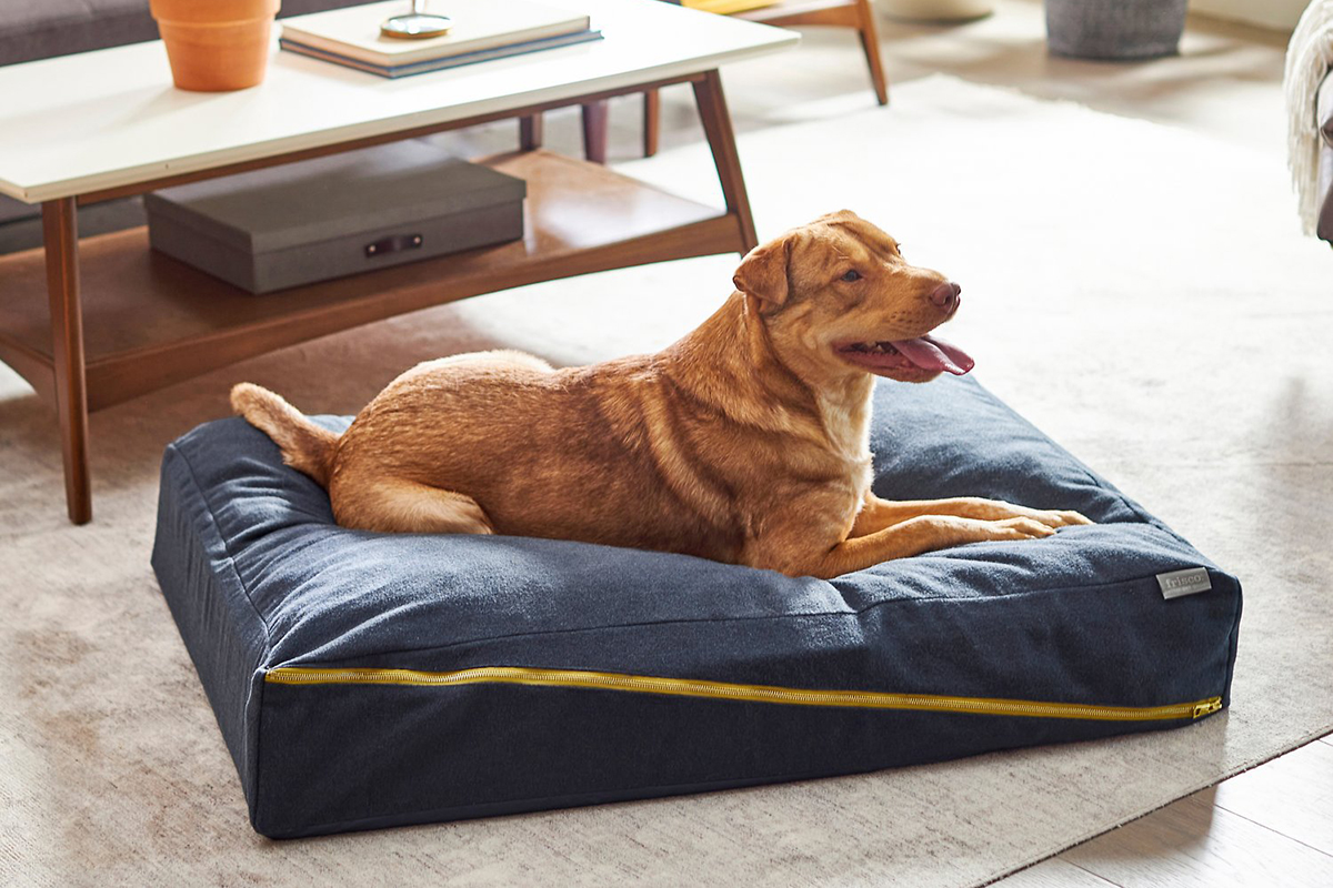 Chewy Dog Bed Sale