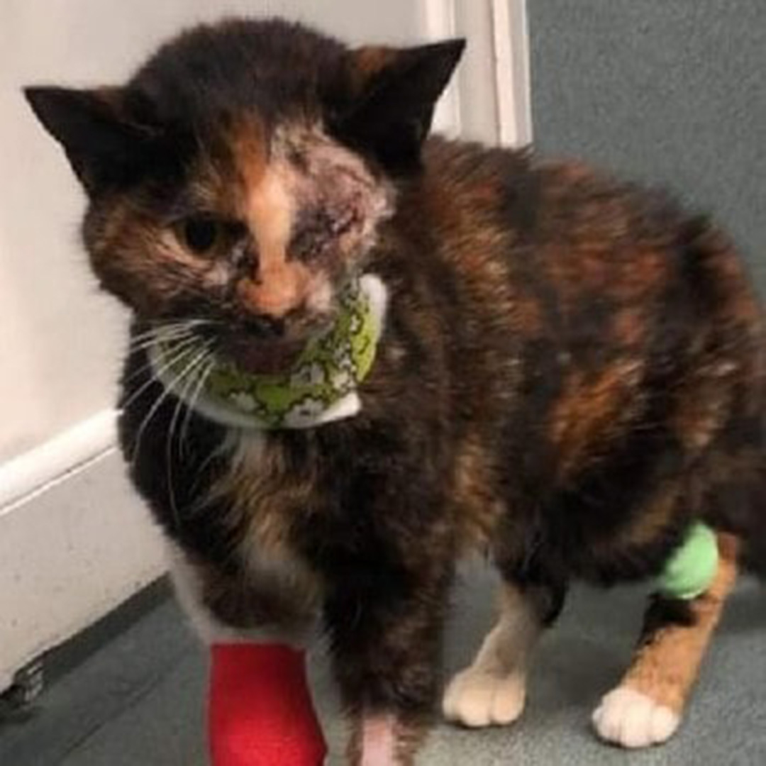 'Miracle cat' lands on paws in new home