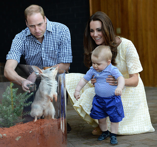 Príncipe William, Kate Middleton, Príncipe George, bilby, marsupial