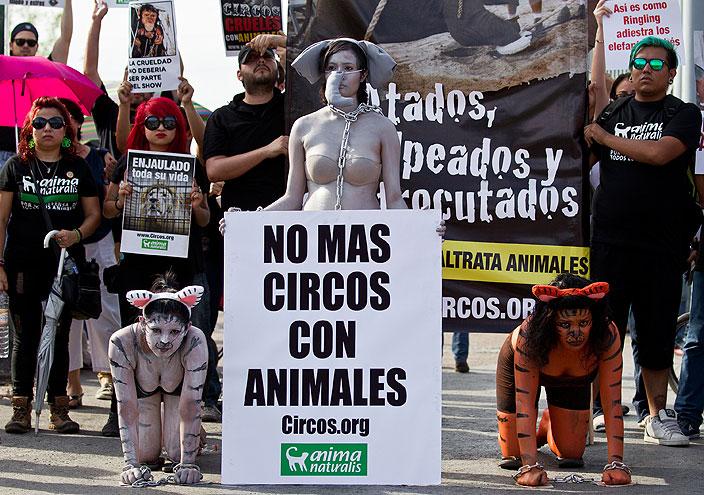Protestas en México en contra de animales en circos