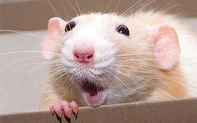 Marty, ratón