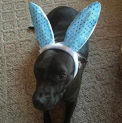 Perritos de Pascua
