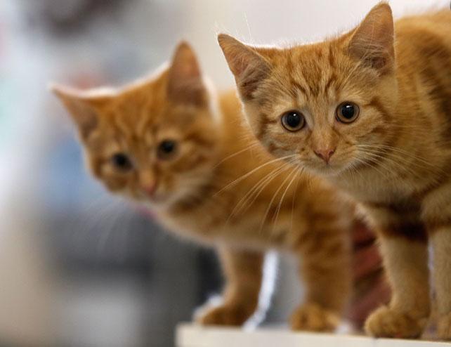 Gatos para artículo