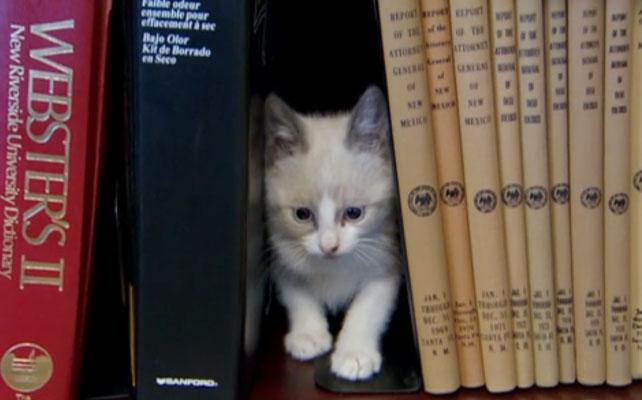 Biblioteca de gatos para artículo