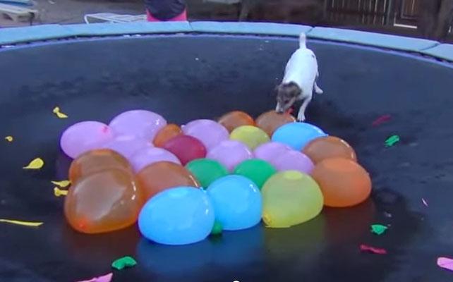 Perro para artículo de balloons