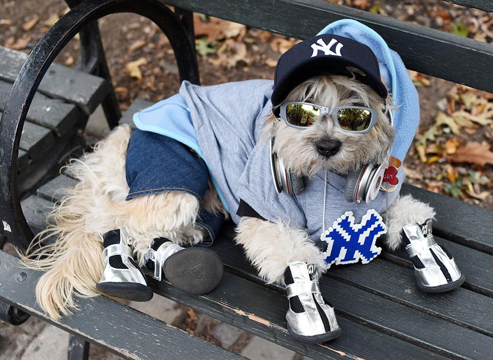 Fan de los Yankees
