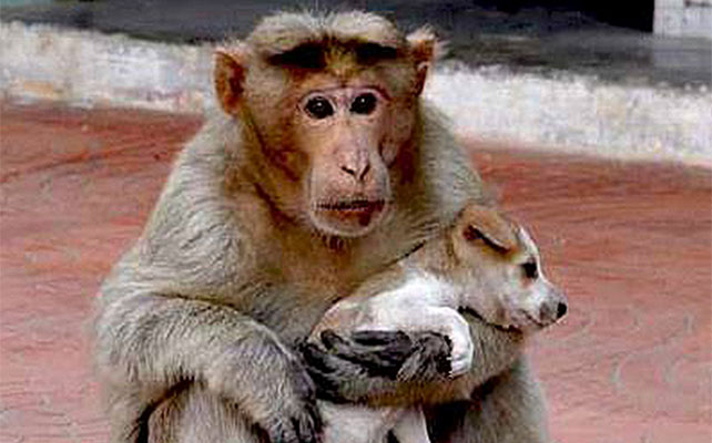 Mono y cachorro