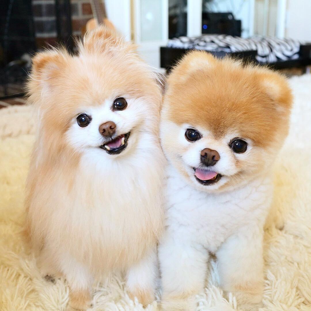 Boo y Buddy