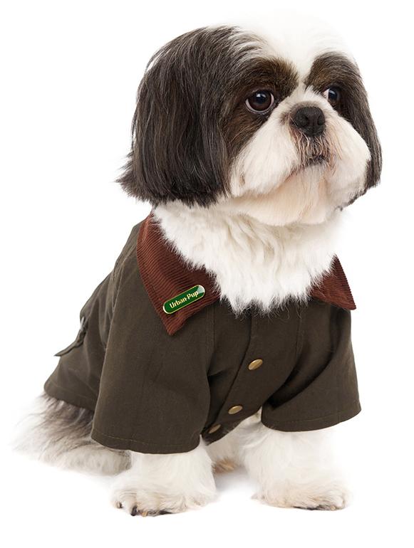 Chaqueta, Urban Pup