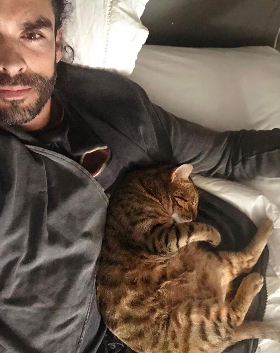 Gonzalo Garcia-Vivanco, gato
