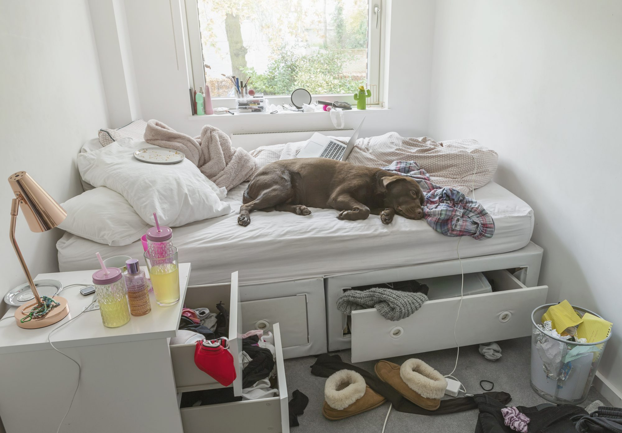 Dog lying on bed in teenagers messy bedroom