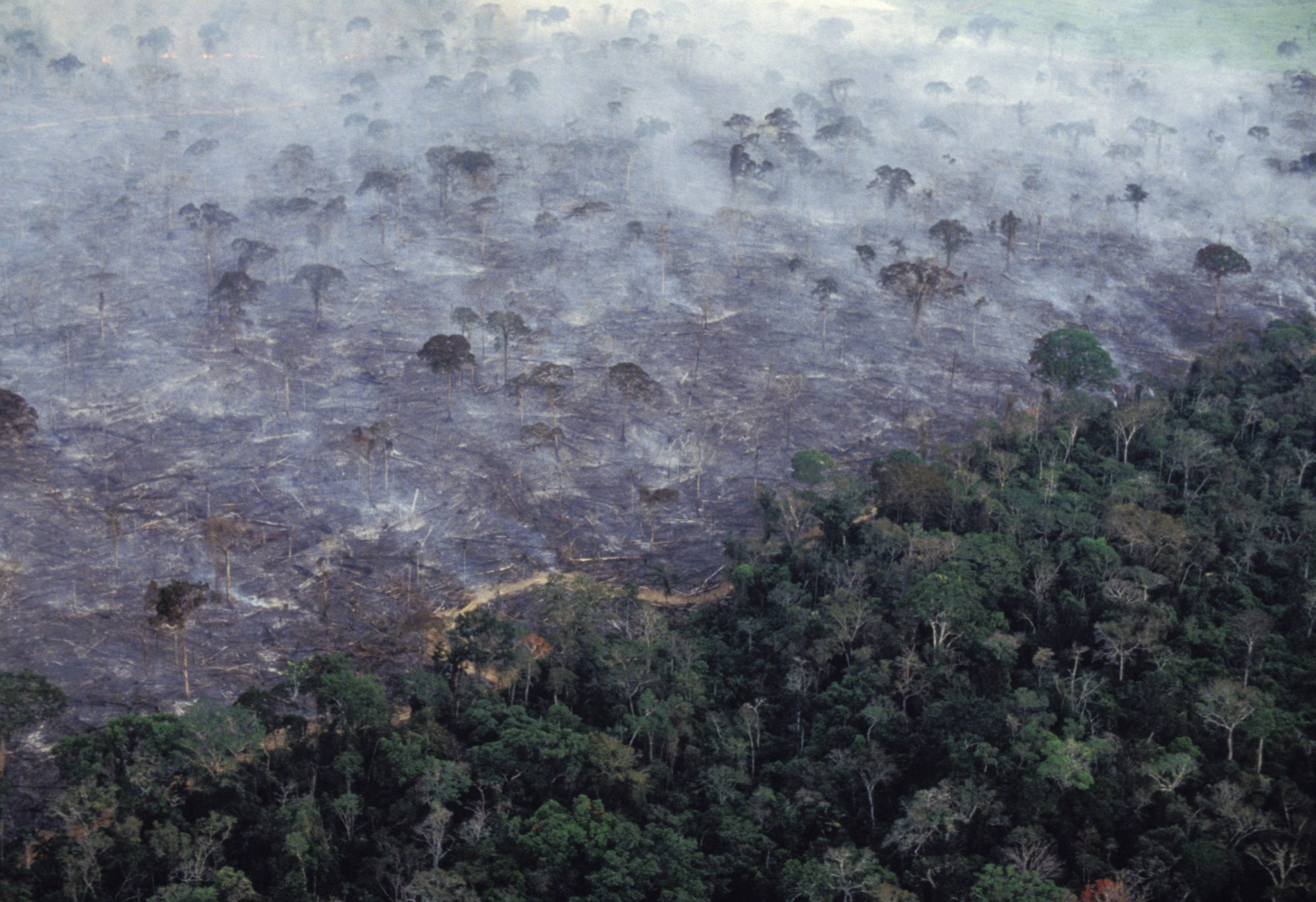 Aerial view of Amazon rainforest burning, farm management