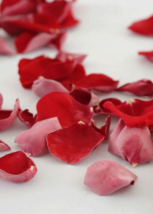 San Valentín regalos sexy