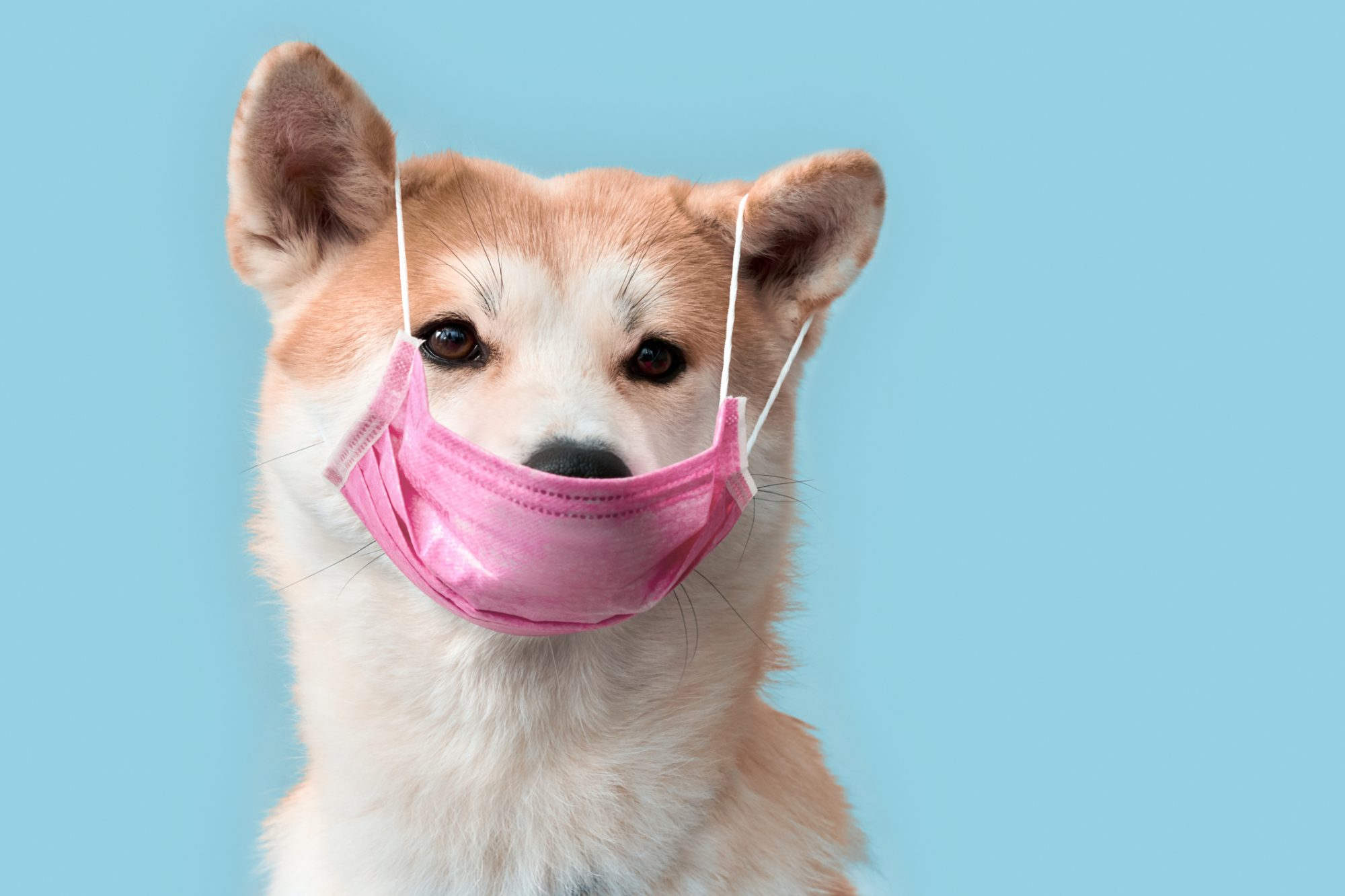 perro máscara coronavirus
