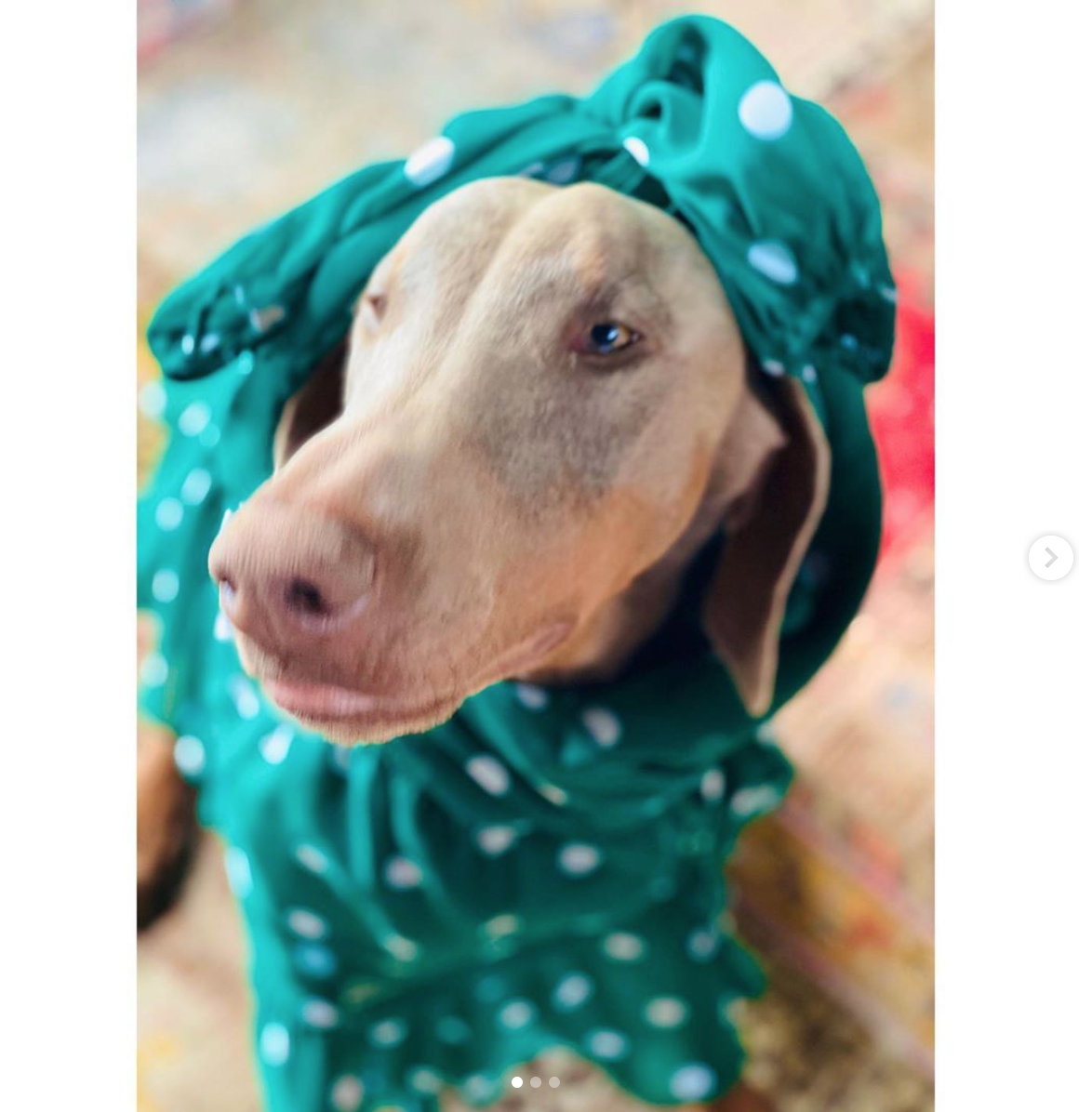 Eva Mendes perro en pijamas