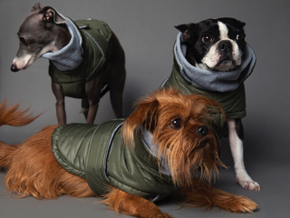ropa, mascatas, perros, the striped dog