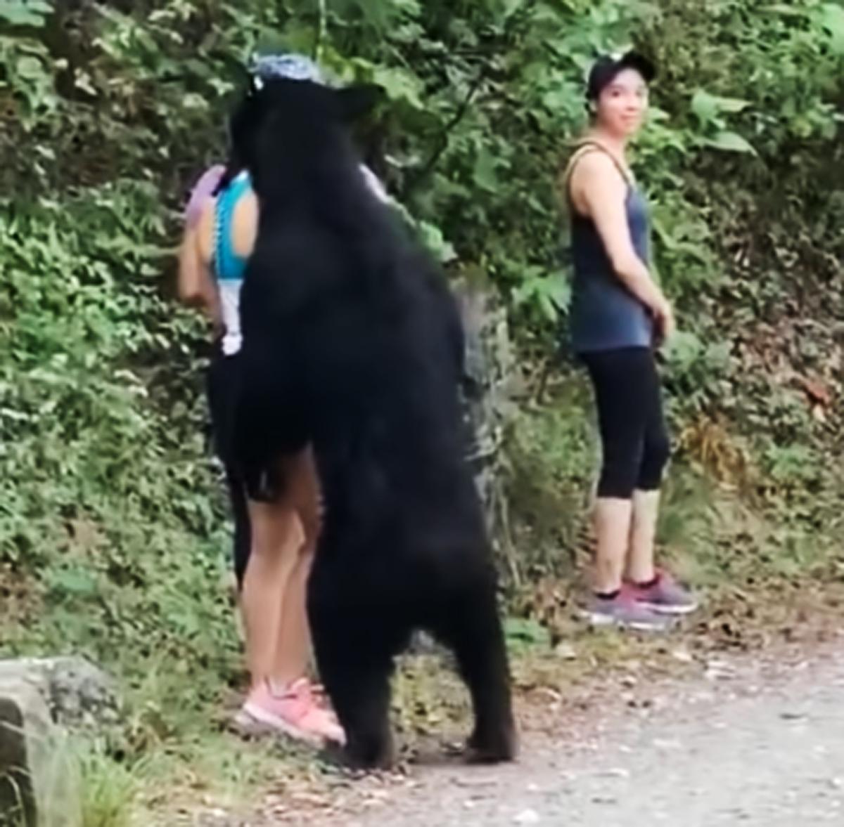 ataque oso negro mexico
