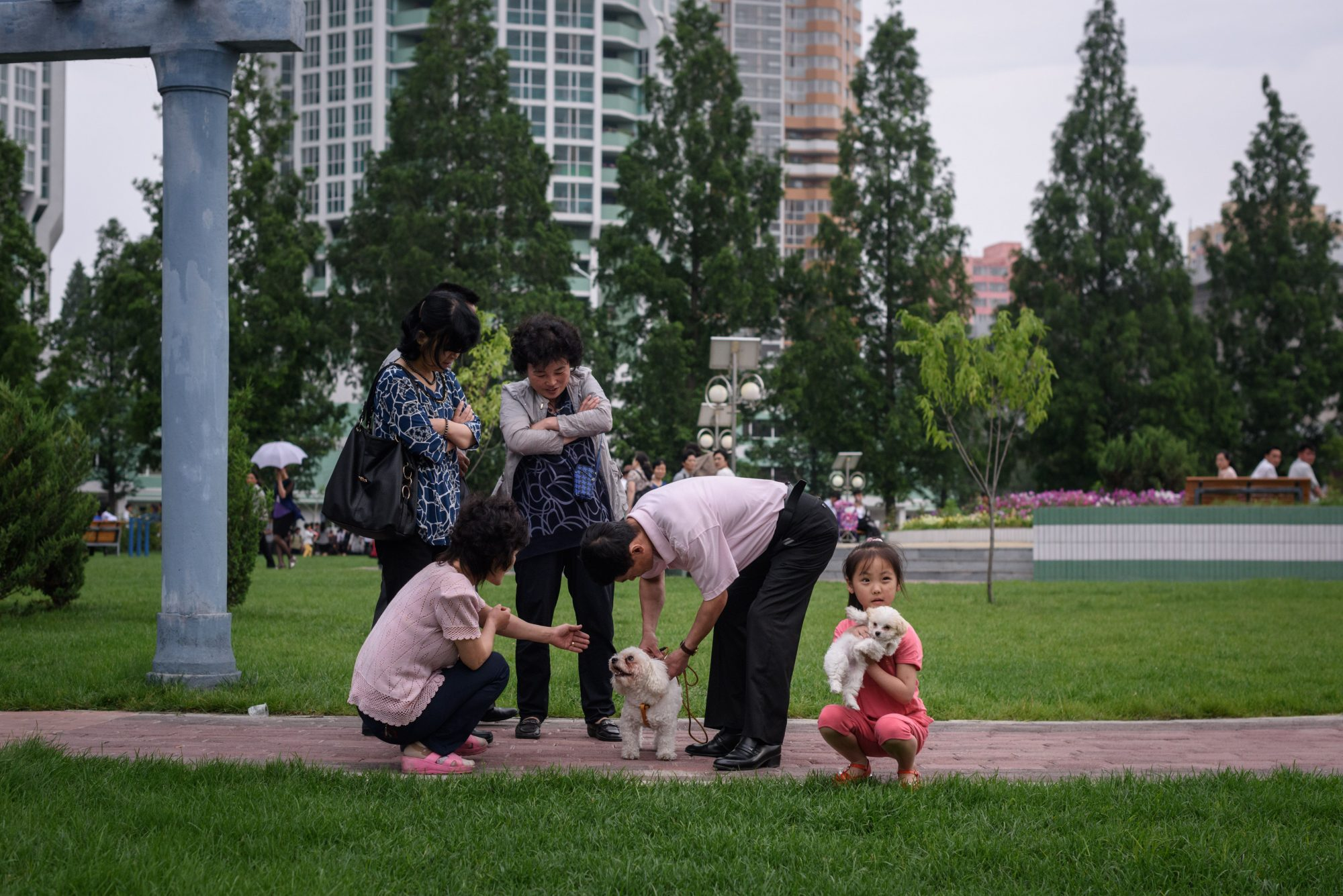 perros en corea del norte