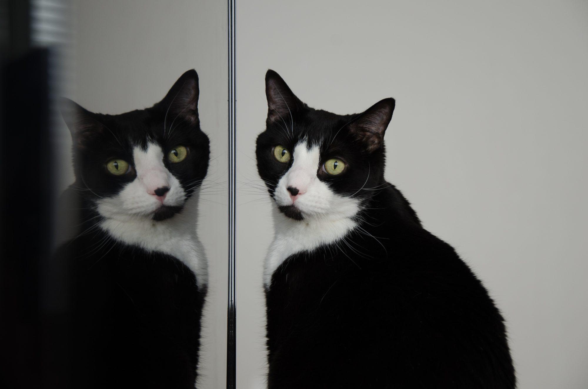 Gato clone - generic photo; Mr. Tufts Jr.