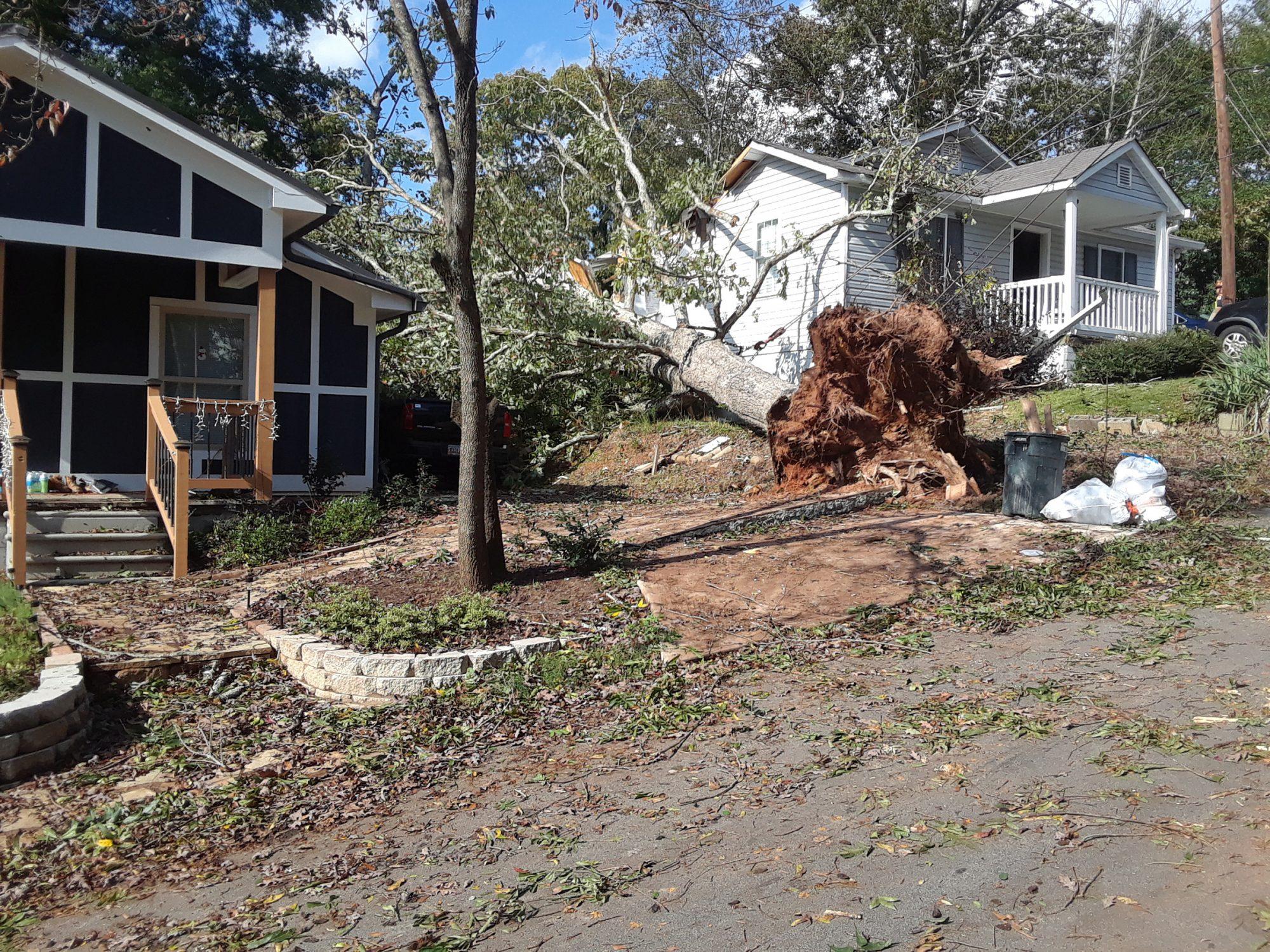 Tree on a house in Buford, Georgia