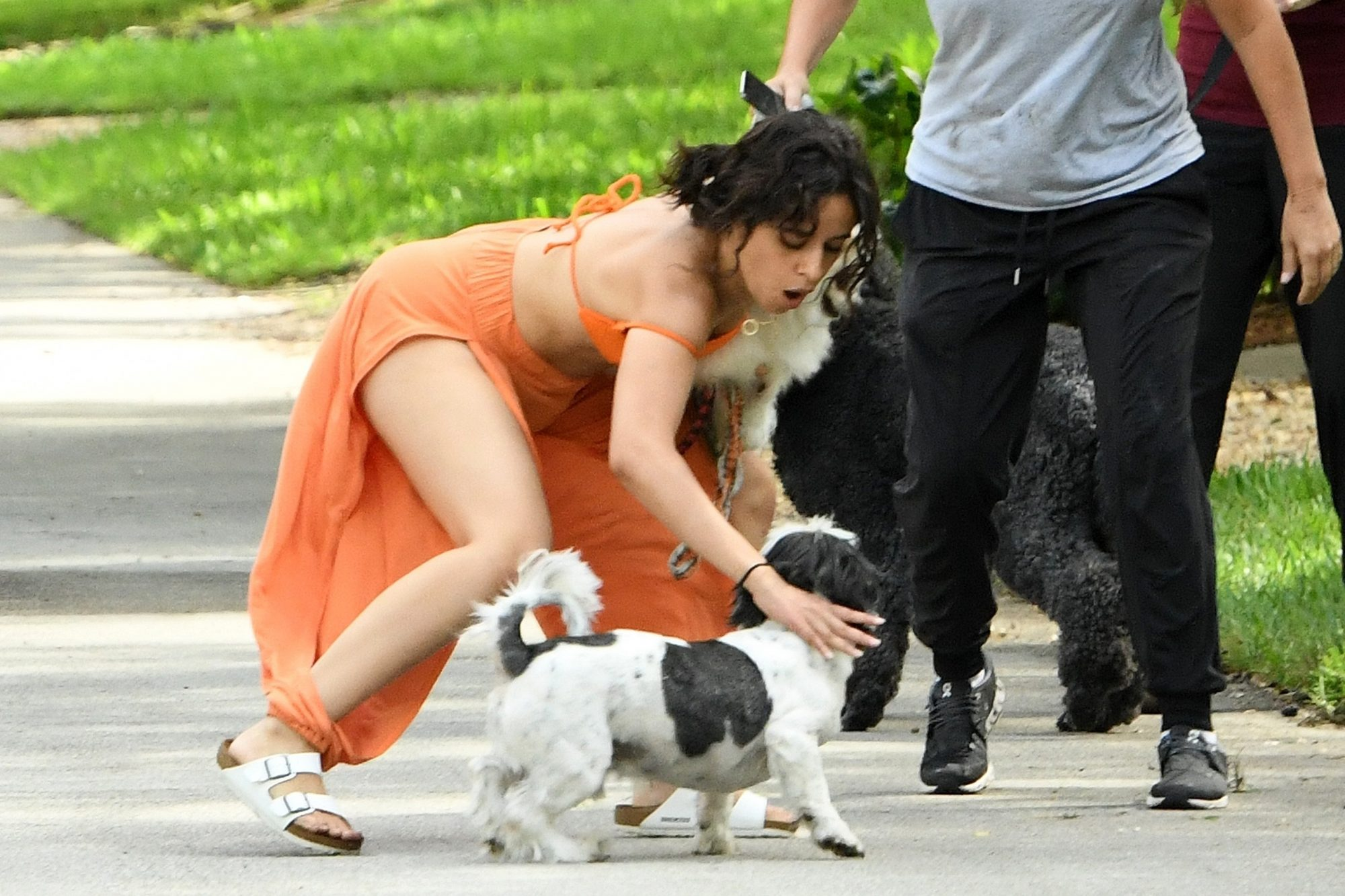 Camila Cabello & Shawn Mendes Struggle with their Dogs on a Walk