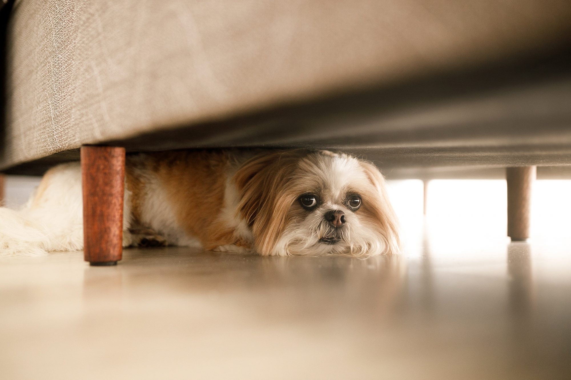 scared dog hiding under couch