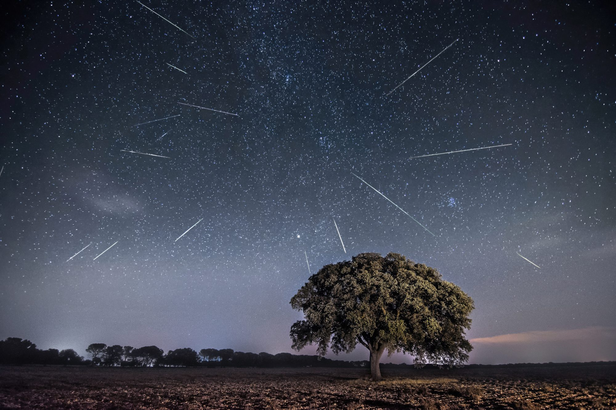 perseids meteor shower behind a tree in the night sky