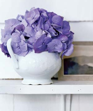 Hydrangeas in a sugar bowl