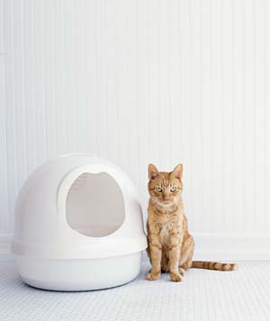 Cat standing next to a litter box