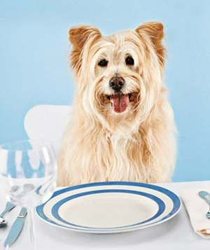 Dog sitting at dinner table