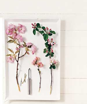 Cherry, quince, and apple blossoms
