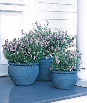 Plants in blue pots
