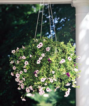 For an especially easy hanging garden, try mini petunias: They never need deadheading, and they thrive in sun or a mix of sun and shade.