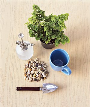 Tools for repotting a plant