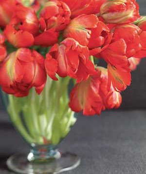 0802red-tulips